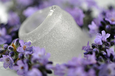 Beachglass Photograph - Lavender Wanna-be by Joanne R Daum