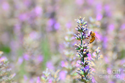 Photograph - Lavender With Honey Bee by Jim And Emily Bush