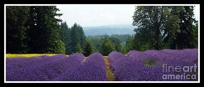 Photograph - Lavender Woods  by Susan Garren