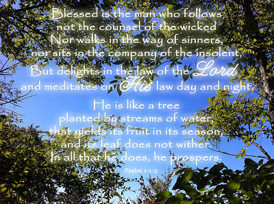 Photograph - Law Of The Lord Psalm 1 by Robyn Stacey