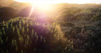 Lawsons Flowers Of Light. Art Print by Stan Angel