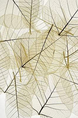 Layered Leaves Print by Kelly Redinger