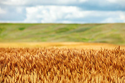 Wheat Field Sky Photograph - Layers Of Grain by Todd Klassy