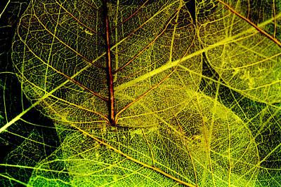Art 2013 Digital Art - Layers Of Leaves by Bonnie Bruno