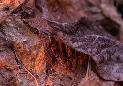 Photograph - Layers Of Leaves by Haren Images- Kriss Haren