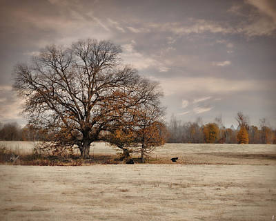 Fall Scenes Photograph - Lazy Autumn Day - Farm Landscape by Jai Johnson