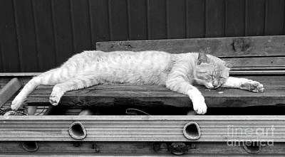 Art Print featuring the photograph Lazy Cat by Andrea Anderegg
