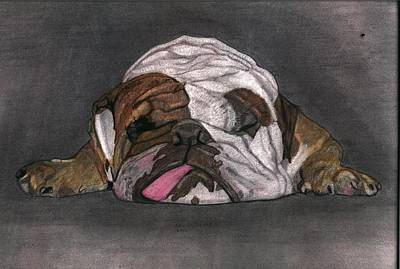 English Bull Dog Drawing - Lazy Daisy by Don  Gallacher