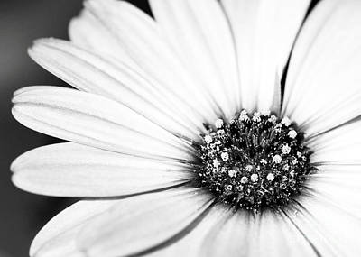 Lazy Daisy In Black And White Art Print by Sabrina L Ryan