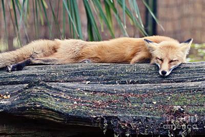 South Louisiana Photograph - Lazy Day by Scott Pellegrin