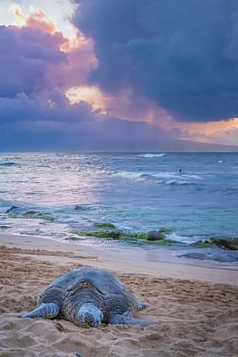 Turtle Photograph - Lazy Days On Maui by Hawaii  Fine Art Photography
