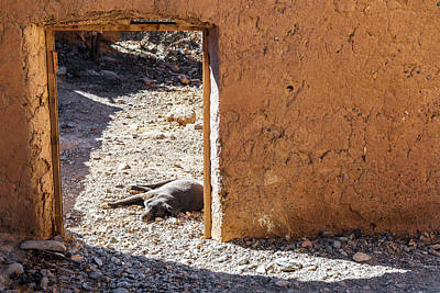 Abandoned Pets Photograph - Lazy Dog In A Doorway by Jess Kraft
