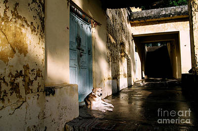 Dog At Door Photograph - Lazy Dog Resting In The Afternoon by Eldad Carin
