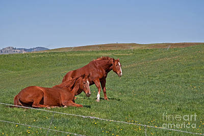 Print featuring the photograph Lazy Horses by Valerie Garner