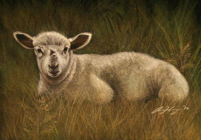 Painting - Lazy Lamb by Rachael Curry