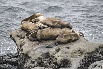Digital Art - Lazy Sea Lions by Photographic Art by Russel Ray Photos