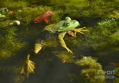 Photograph - Lazy Spring Frog by Kathy Baccari