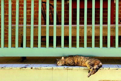 Photograph - Lazy Summer Afternoon by Robert Clayton