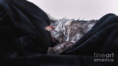 Photograph - Lazy Sunday by Julie Clements