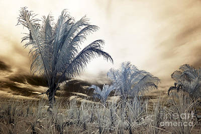 Brown Tones Photograph - Lbi Infrared Palms II by John Rizzuto