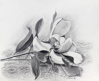 Magnolia Flower Drawing - Le Cadeau by Nancy Cason