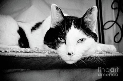 Andee Design Monochrome Photograph - Le Cat by Andee Design