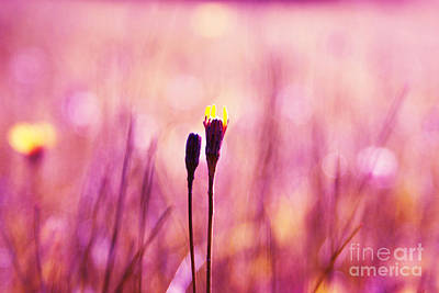 Impressionism Photograph - Le Centre De L Attention - Pink S0301 by Variance Collections