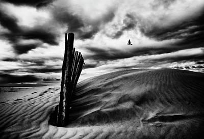 Dunes Wall Art - Photograph - Le Cri Du Goa?land, Le Soir, Au-dessus Des Canisses by St?phane Pecqueux