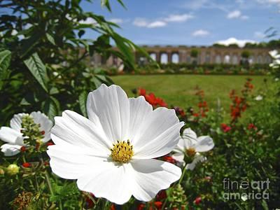 Photograph - Le Fleur De Versailles by Suzanne Oesterling