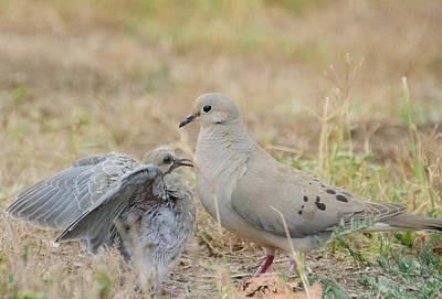 Photograph - Le Petite Dove 3 by Fraida Gutovich
