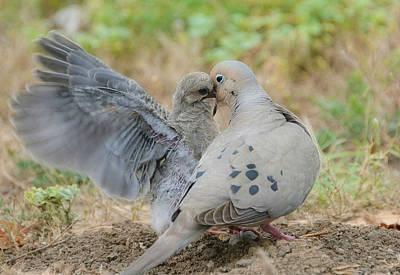 Photograph - Le Petite Dove 4 by Fraida Gutovich