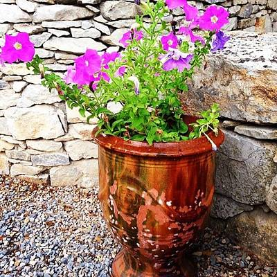Decorative Photograph - Anduze Flower Pot With Petunias by Cristina Stefan