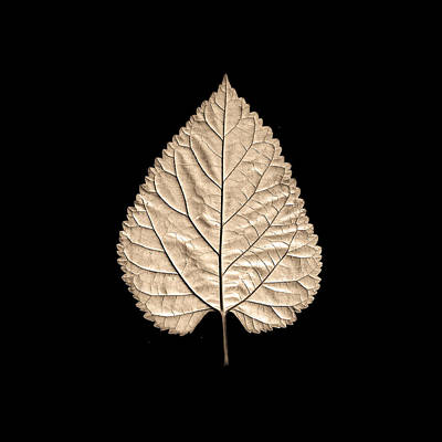 Photograph - Leaf 5 by Sumit Mehndiratta