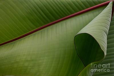 Photograph - Leaf Abstract by Jane Ford