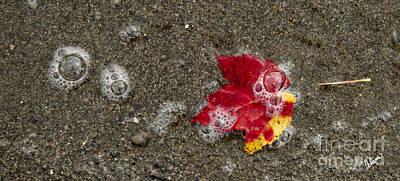 Photograph - Leaf by Alana Ranney