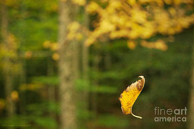Photograph - Leaf Aloft by Diane Enright