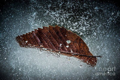 Photograph - Leaf And Ice by Ronald Grogan