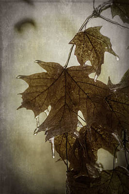 Photograph - Leaf And Ice With Texture by Wayne Meyer