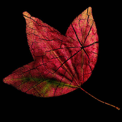 Leaf And Tree Art Print by Jon Woodhams
