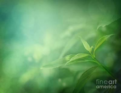 Npetolas Photograph - Leaf Background by Mythja  Photography
