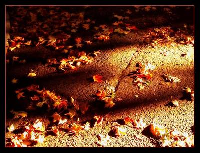 Photograph - Leaf Beach Sun And Shadow by Miriam Danar