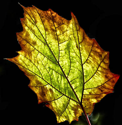 Photograph - Leaf by Bill Barber