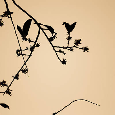 Photograph - Leaf Birds by Darryl Dalton