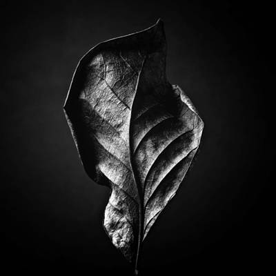 Photograph - Black And White Nature Still Life Art Work Photography by Artecco Fine Art Photography