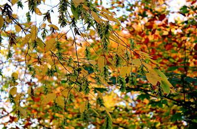 Photograph - Leaf Breezes by Deborah  Crew-Johnson