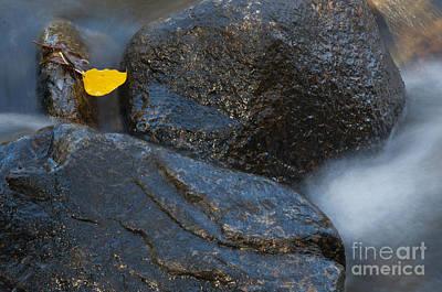 Leaf Bridge One Art Print by Vinnie Oakes
