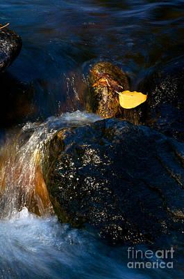 Leaf Bridge Two Art Print by Vinnie Oakes