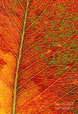 Photograph - Leaf Change by Alice Cahill