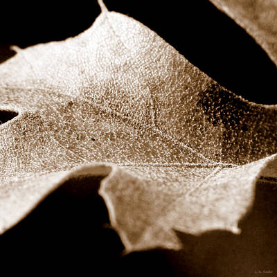 Art Print featuring the photograph Leaf Collage 1 by Lauren Radke