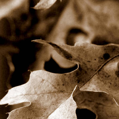 Art Print featuring the photograph Leaf Collage 4 by Lauren Radke